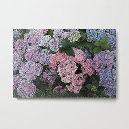 Purple Hydrangea Flowers Metal Print