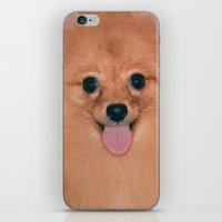 pomeranian iPhone & iPod Skins featuring Pomeranian by Pancho the Macho