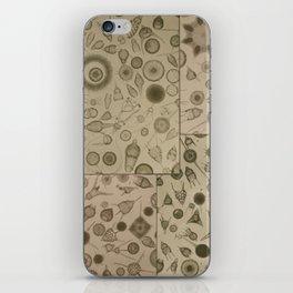 Diatom Design iPhone Skin