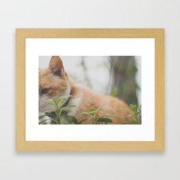 Half a Cat Framed Art Print