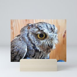 Western Screech Owl profile Mini Art Print