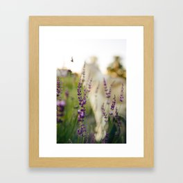 Summertime Lavender Framed Art Print