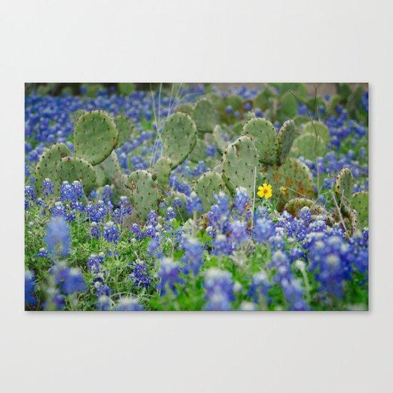 prickly springtime Canvas Print
