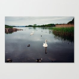 Ireland - White Swans, Black Waters Canvas Print