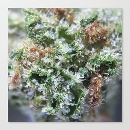 Lemon Girl Scout Cookies Strain Canvas Print