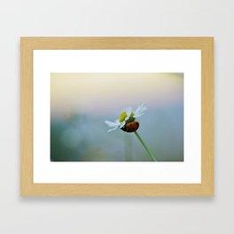 Ladybug on a Chamomile Flower Framed Art Print