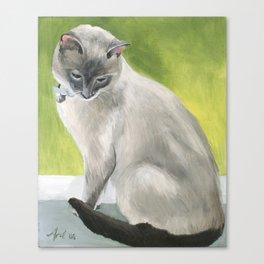 Siamese Cat Portrait Canvas Print