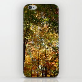 Through the Trees in October iPhone Skin
