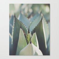 agave Canvas Print