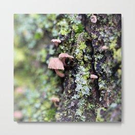 Mushroom - Macro Fungi on Tree Bark Metal Print