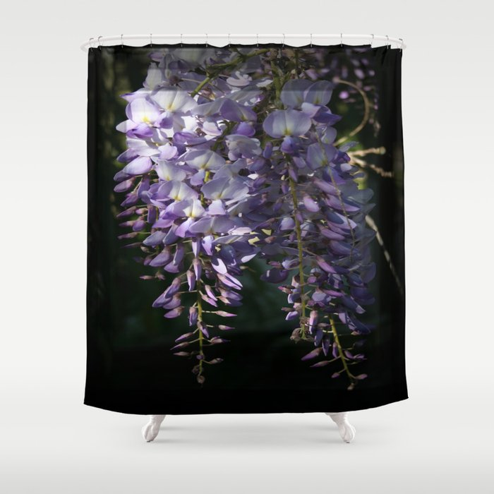 Wisteria With Garden Background Shower Curtain