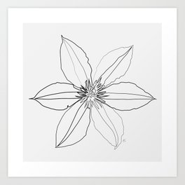 """ Botanical Collection "" - Clematis Flower Art Print"