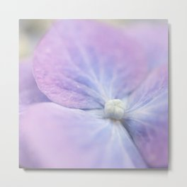 Blue and Purple Hydrangea Blossom Metal Print