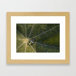 Morning Water Droplet Beauty Framed Art Print