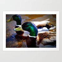 ducks Art Prints featuring ducks by  Agostino Lo Coco
