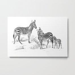 Vintage Zebra Metal Print