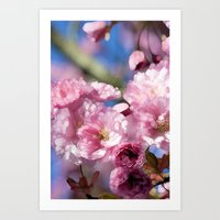 cherry blossoms Art Prints featuring Cherry Blossoms by Joke Vermeer
