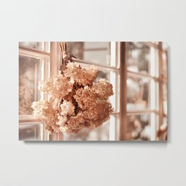 Tethered hydrangea or hortensia Metal Print