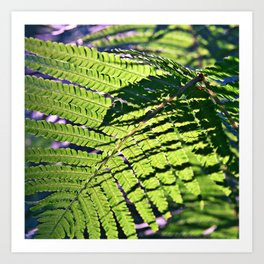 Green Fern in Sunny Dreams Art Print