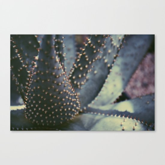 Prickly Succulent Canvas Print