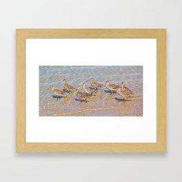Marbled Godwit Shorebirds Framed Art Print