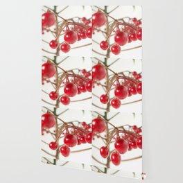 Scarlet Berry  Wallpaper