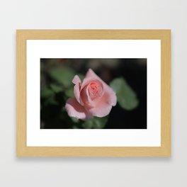 Rose-1 Framed Art Print