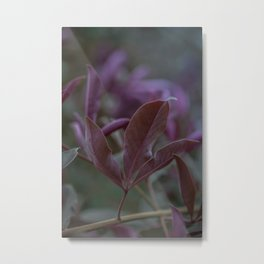 Purple Glow Leaf Print - Nature Photography Metal Print