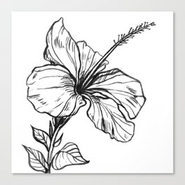 Hibiscus Ink Drawing Canvas Print