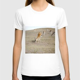 Gizelles  T-shirt