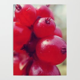 Red Fall Berries Poster
