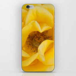 Rose Garden Three iPhone Skin