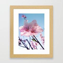 Sakura 01 Framed Art Print