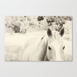 Black and White Palomino Canvas Print