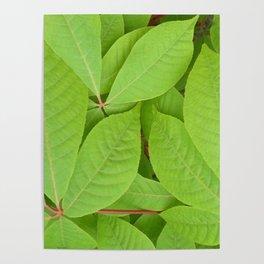 Green leaves II Poster