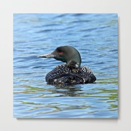 Sleepy time baby loon Metal Print