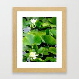 Waterlily #2 Framed Art Print