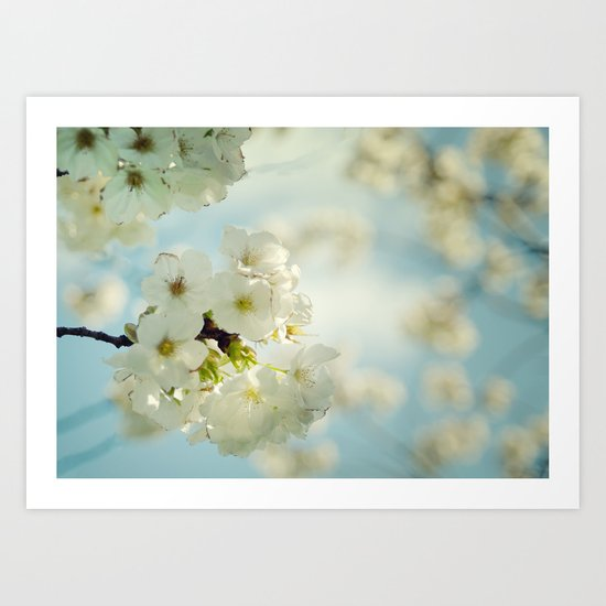 White apple blossoms and a spring blue sky Art Print