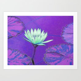 San Diego, California, USA, Balboa, Park, Water Lily in Purple Art Print