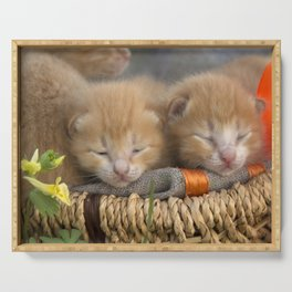 Group of small striped kittens in an old basket. Serving Tray