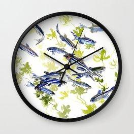 Fish Blue Gray zebrafish, Danio aquarium Aquatic design underwater scene Wall Clock