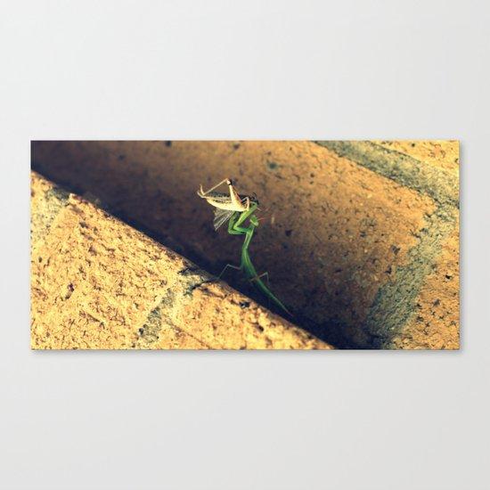 Sacrificial Grasshopper Canvas Print