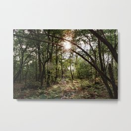 Into the woods | Forest Netherlands  Metal Print