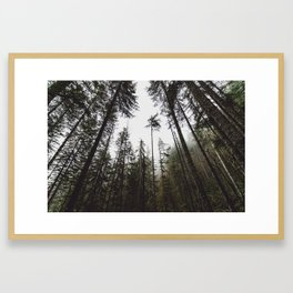 Pacific Northwest Forest Framed Art Print