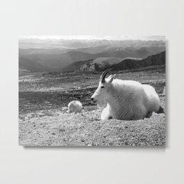 Mountain Goats Metal Print