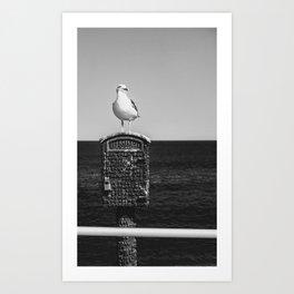 Seagull Takes A Break Art Print