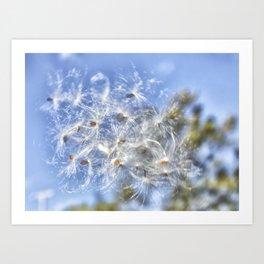 Milkweed Floss Art Print