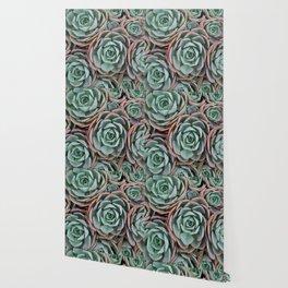 Pink & Green Succulent Garden Wallpaper