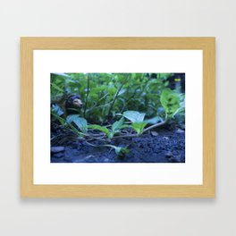 The Lion and the Snail Framed Art Print