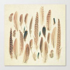 Found Feathers Canvas Print